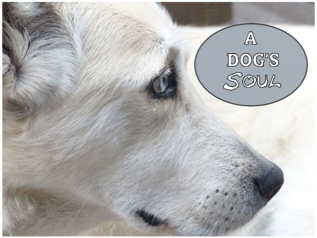 dogs have souls