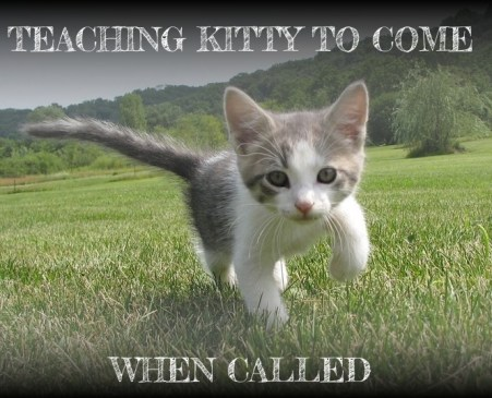 kitten comes when called