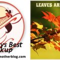 Image-SundaysBest-Leaves-Are-Falling