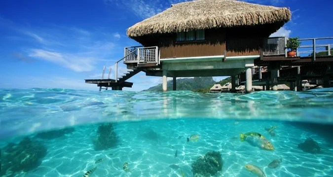 The fish are abundant just outside the bungalows at the Hilton Moorea