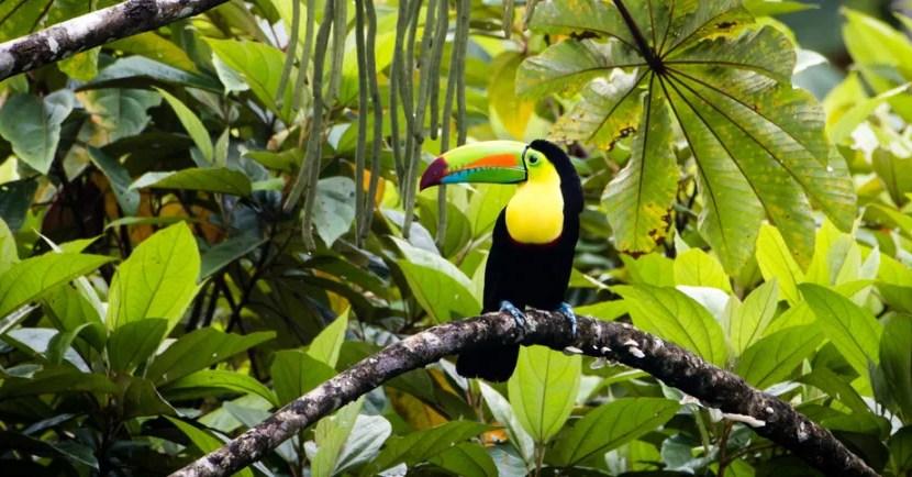 Costa Rica Featured