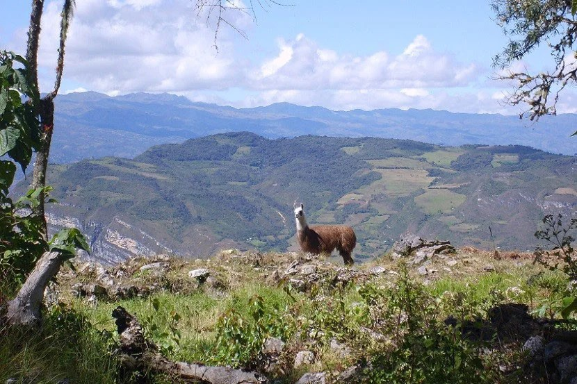 You'll have plenty of opportunities to befriend other solo travelers, or this adorable alpaca.