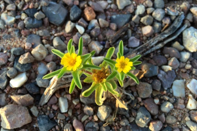 Flowers at Arrábida Natural Park.
