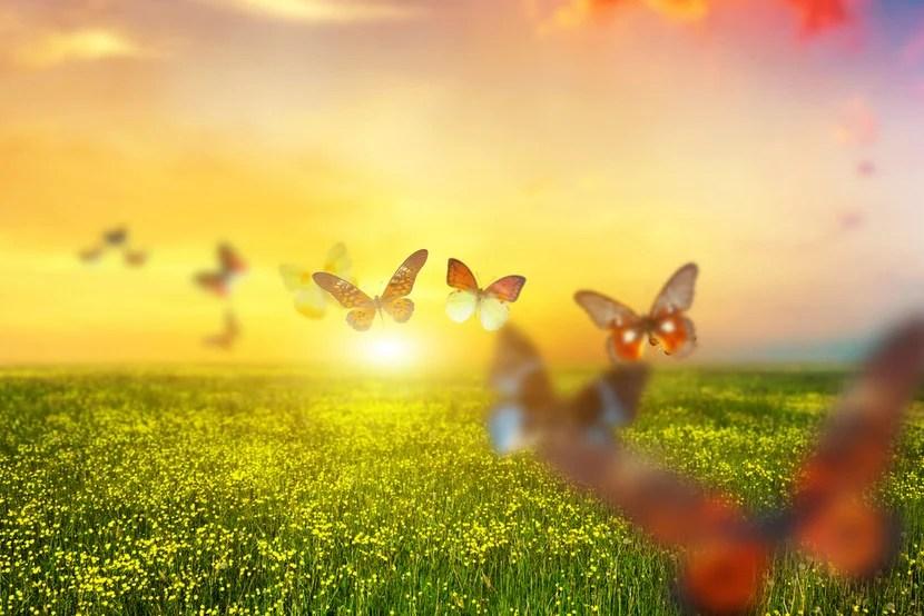 IMG_butterflies