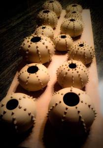 Gina Feddersen Urchins Drying