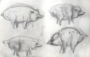 Susan Halls drawing of pigs