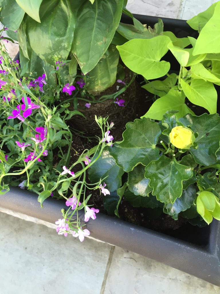 place the plants in the container garden pot