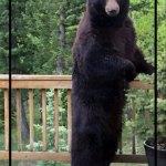 Colorado Parks and Wildlife Introduces Bear Aware Videos