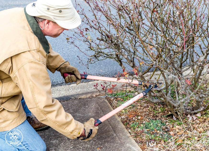 Spring-Ready Landscape Checklist