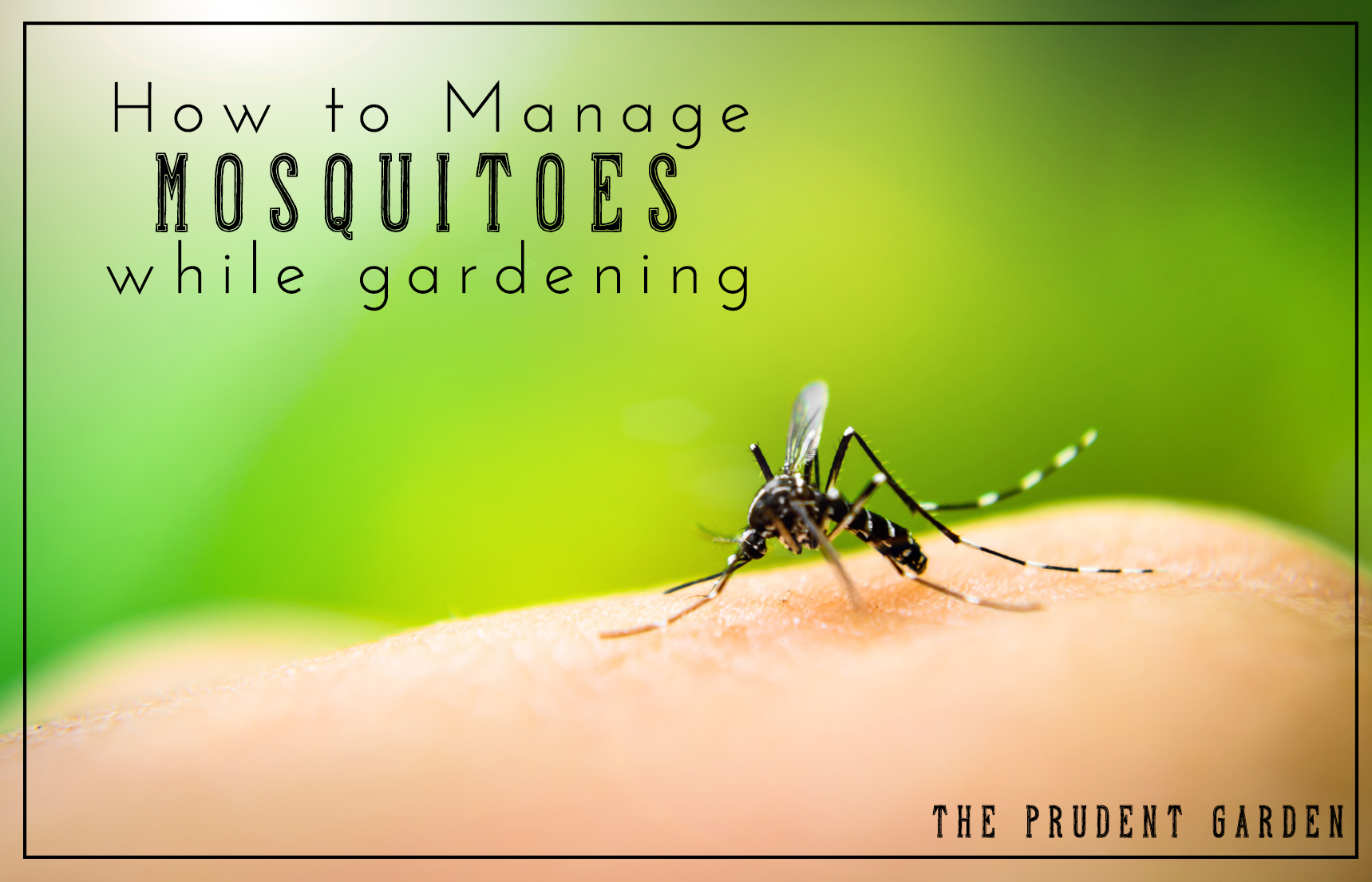 to manage mosquitoes while gardening