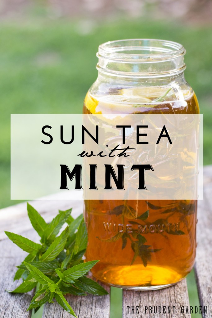 Sun Tea With Mint