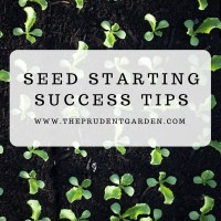 Seed Starting Success Tips