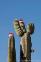 Christmas Saguaro