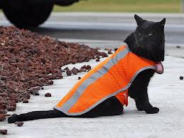 crossing guard cat