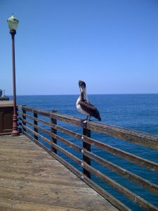 On the pier in Oceanside!