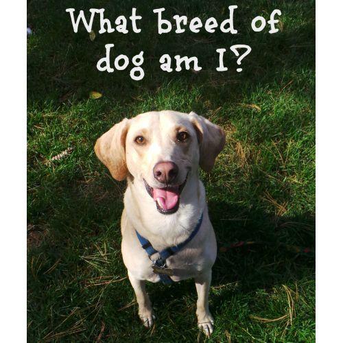 Medium Crop Of What Dog Breed Am I
