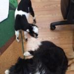 Sawyer Farm's Smores checks out Turbo