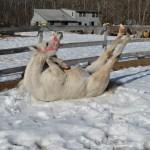 Horse Yoga!