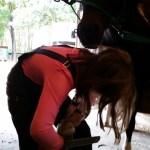 Vicki rasping Devil's hoof