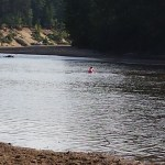 Swimming in the Saco River
