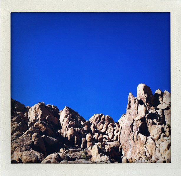 JOSHUA TREE PART 2: COLOR INSPIRATION SPRING 2012   The Sche Report / Margaret Sche