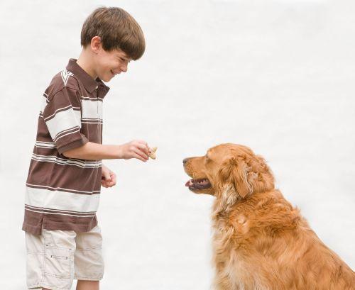 Medium Of Treat A Dog