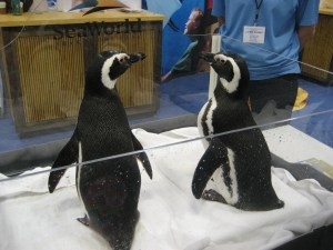 Sea World Penguins at the NSTA Conference in San Francisco