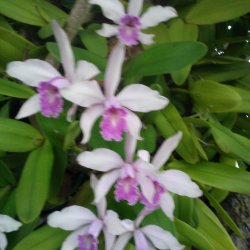 Orchids « the Shrub Queen
