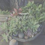 In the Garden | Succulents