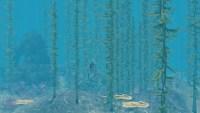 海底世界。
