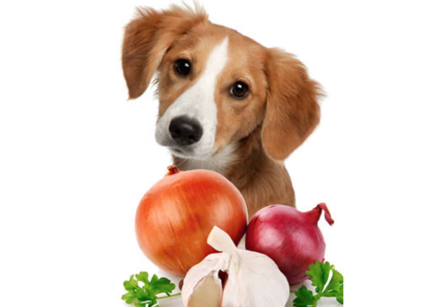 Dazzling Risks Re Are Tons Side Effects That May Occur If Your Dog Eatsenough Can Dogs Eat Side Effects Treatment Can Dogs Eat Avocado Or Lettuce Can Dogs Eat Avocado Oil bark post Can Dogs Eat Avocados