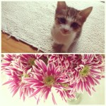 Baby Mae and Summer Blooms