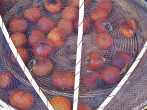 Songso House Tour, Cheongsong, Korea, persimmons in the autumn