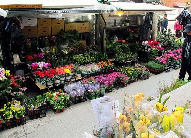 Jongno Flower Market Alley, Seoul, Korea