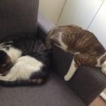 Meyo & Mae, Cats Sleeping