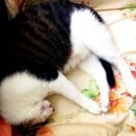 Meyo, Cats Sleeping