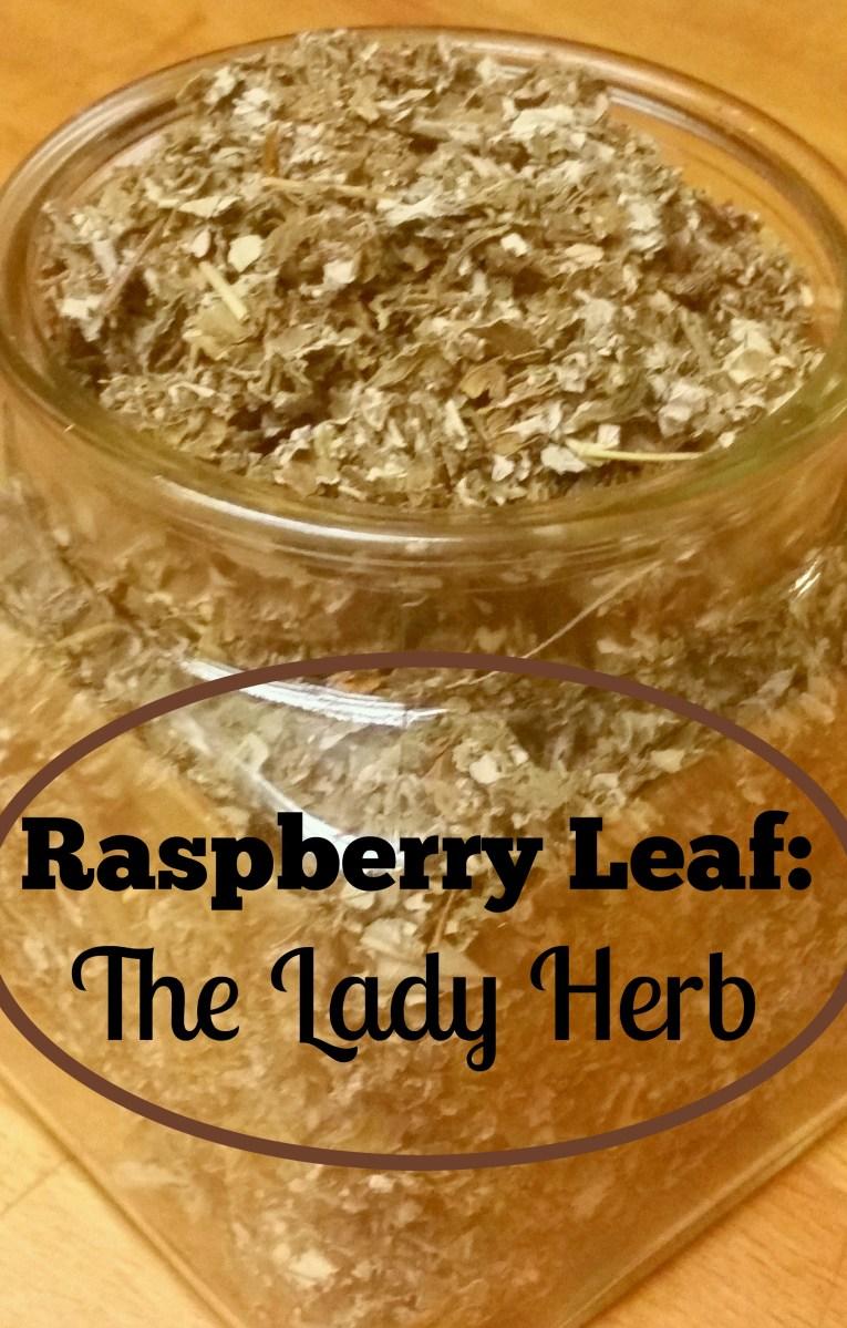 Raspberry Leaf:  The Lady Herb