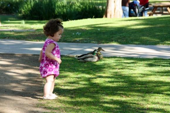 Duck Impression