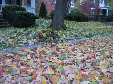 Autumn_066
