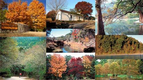 foliage_collage_500x281