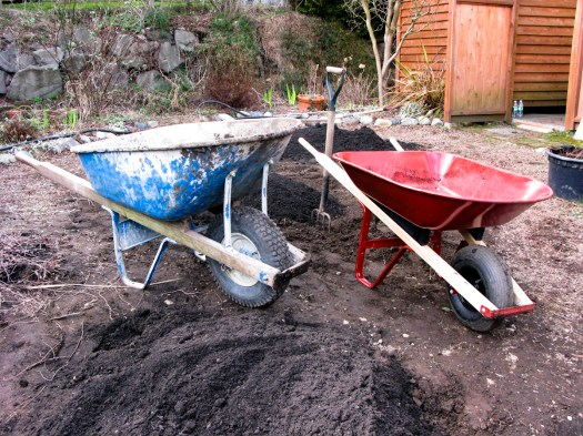 """My cute dad, Jerry, helped me work on the raised beds.  Working with my dad, I still feel like a little girl.  Here's his contractor's wheelbarrow alongside my beloved little orange one.  He said, """"Make sure you point the wheelbarrow the way you want to go before you fill it up.""""  Durned if the thing wasn't pointed the wrong way every single time I went to move it."""
