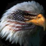 American_Eagle_Image