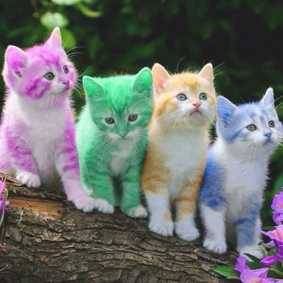 coloured kittens