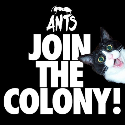 ants join the colony