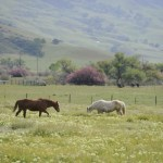 two-horses-in-a-field-in-lost-valley_w725_h482