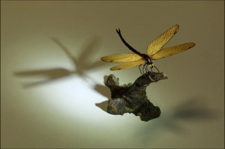 Dragonfly carving
