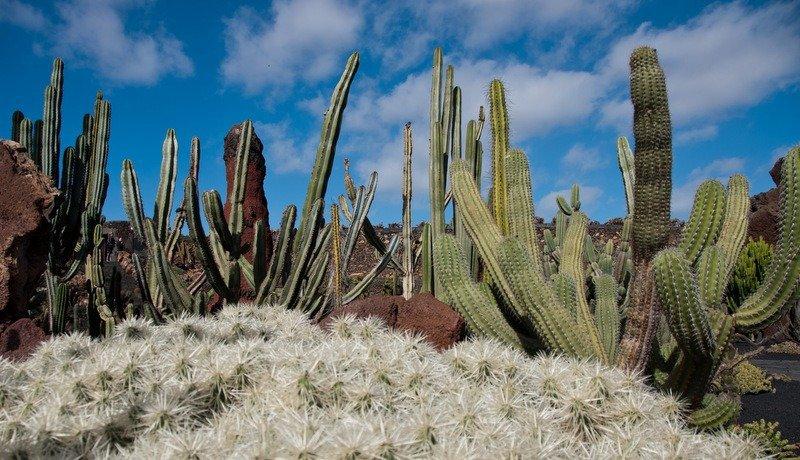 Top 5 sights to see in lanzarote the travelbunny for Jardin de cactus lanzarote