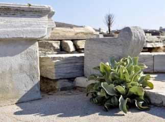 Green plant on Delos