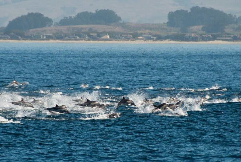 Dolphins take flight