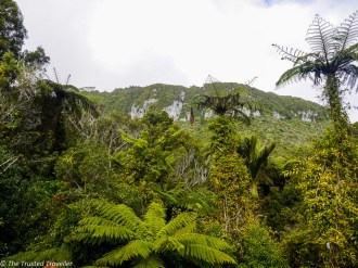Looking up through the rainforest on the Truman Tracki - Driving New Zealand's Wild West Coast - Things to See & Do - The Trusted Traveller